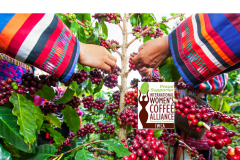 Coffee-beans-logo-Copy-Copy