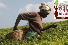 Coffee-farmer-banner-Copy